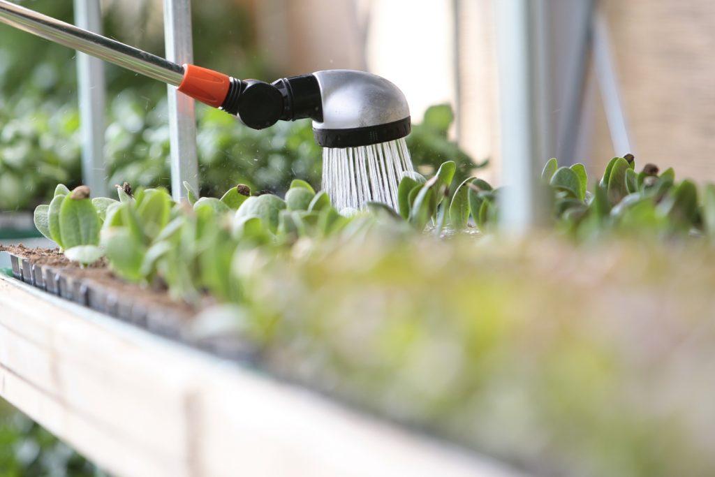 arrosage plantes jardin