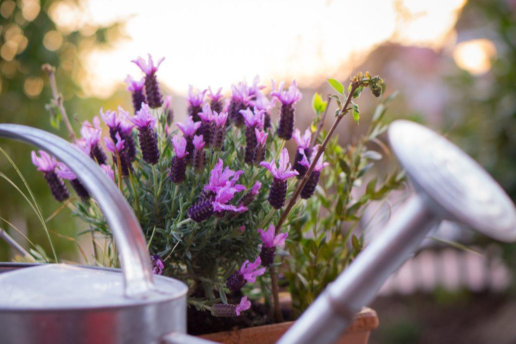 comment arroser les plantes