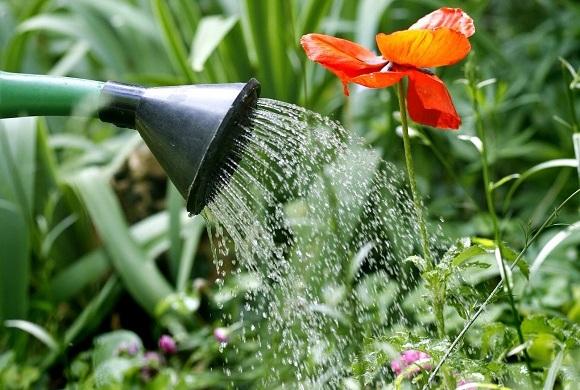 eau de qualité pour arrosage des plantes